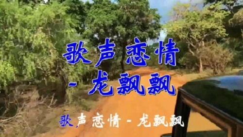Ge Shen Lian Qing 歌声恋情 Singing Love Lyrics 歌詞 With Pinyin By Long Piao Piao 龙飘飘