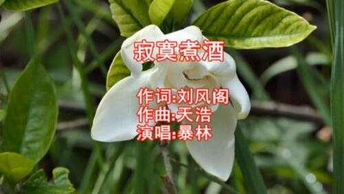Ji Mo Zhu Jiu 寂寞煮酒 Lonely Cooking Wine Lyrics 歌詞 With Pinyin