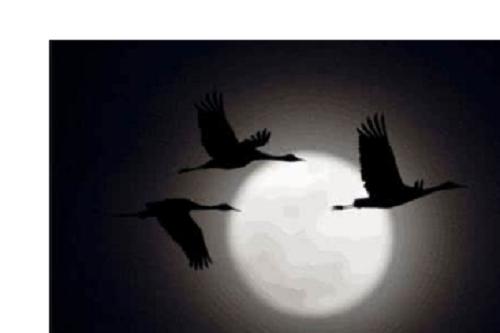 Bu Gui Yan 不归雁 No Return Lyrics 歌詞 With Pinyin By Pang Hu 胖虎