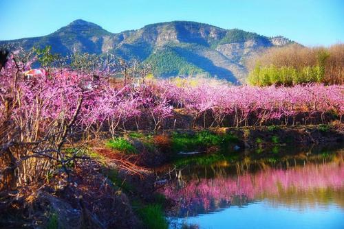 Chun Feng Zui 春风醉 Spring Breeze Intoxication Lyrics 歌詞 With Pinyin By Qi Duo Jia Zu 七朵家族,Qu Ku 曲酷