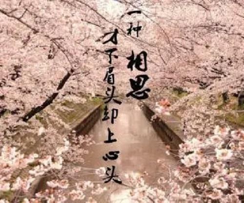 Xiang Si Chang Yi Cun 相思长一寸 Lovesick Is One Inch LongLyrics 歌詞 With Pinyin By Ze Dian 泽典