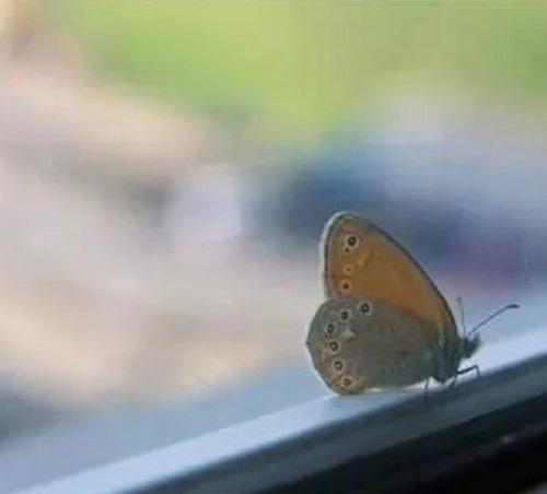 Luo Dan De Hu Die 落单的蝴蝶 The Single Butterfly Lyrics 歌詞 With Pinyin By Chen Rui 陈瑞 Chen Rui