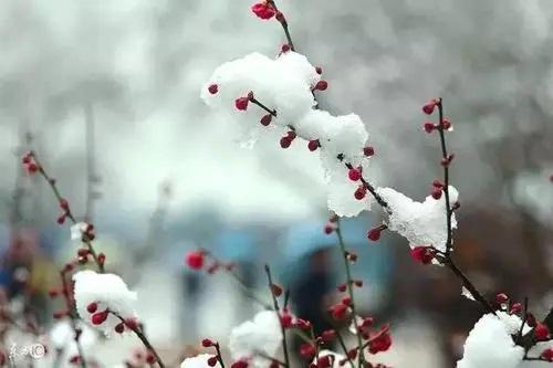 Luo Xue Wei Qi 落雪为期 By The Date Snow Falls Lyrics 歌詞 With Pinyin By Duan Ao Juan 段奥娟 Duan Aojuan