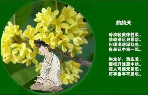 Zhe Gu Tian Gui Hua 鹧鸪天·桂花 Partridge Day - Osmanthus Fragrans Lyrics 歌詞 With Pinyin By Yu Ke Wei 郁可唯 Yisa Yu