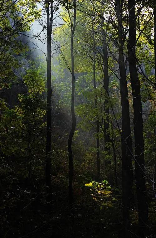 Shan Lin Zhong Ji 山林中记 Mountain Forest Journey Lyrics 歌詞 With Pinyin By Tian Zhi Fang 田智方