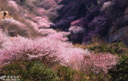 Shan Tao Hua 山桃花 Mountain Peach Lyrics 歌詞 With Pinyin By Fan Fan 范饭