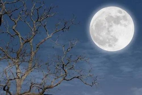 Ming Yue Wu You 明月无忧 Bright Moon Carefree Lyrics 歌詞 With Pinyin By Cha Li Li Li Zi 茶理理理子