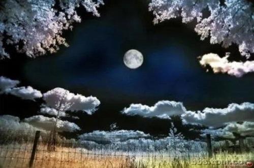 Yue Guang Xia De Lang Man 月光下的浪漫 Romance In The Moonlight Lyrics 歌詞 With Pinyin By Hu Mi Dian 胡蜜丹