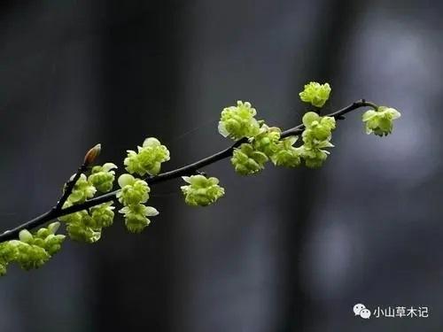 Ci Du Jian Hua Zhi 此度见花枝 Can See Flower Branches Here Lyrics 歌詞 With Pinyin By Xiao Qu Er 小曲儿