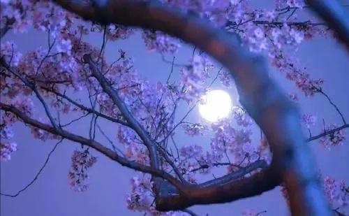 Qing Feng Ba Yue Rou 清风把月揉 The BreezeRubs The Moon Lyrics 歌詞 With Pinyin By Chen Xiao Man 陈小满
